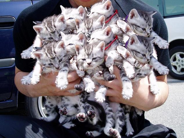 [many+cats]