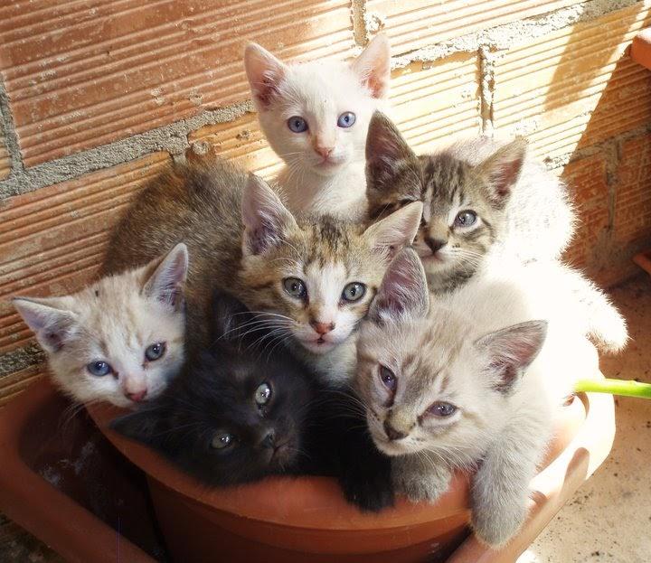 Pub zeta solidario se regalan gatitos y cachorros de huski - Gatitos de un mes ...