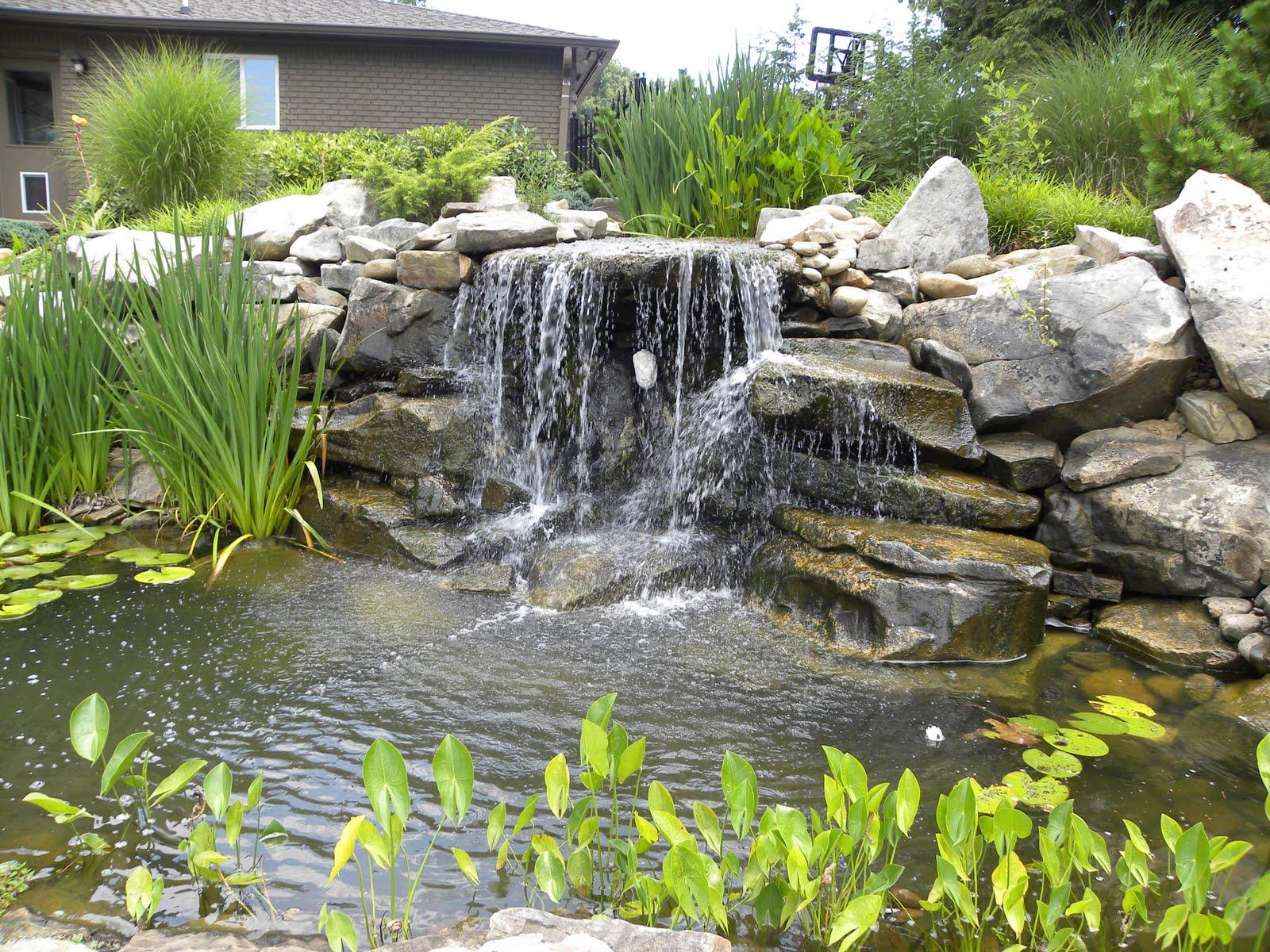 Regina 39 S Garden Koi Pond Tour Pond 15