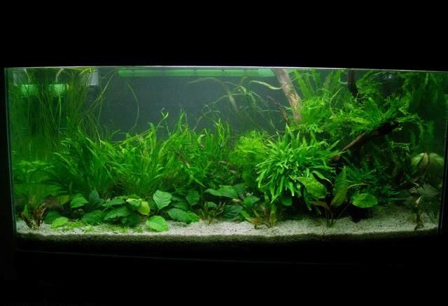 Fish Lovers Vs Aquascape: seting aquascape (part II)