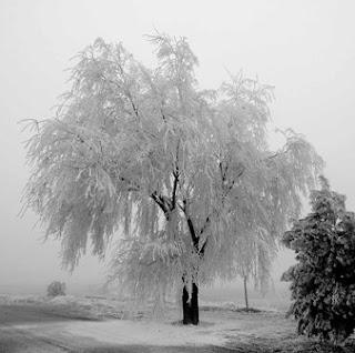 Gélido invierno
