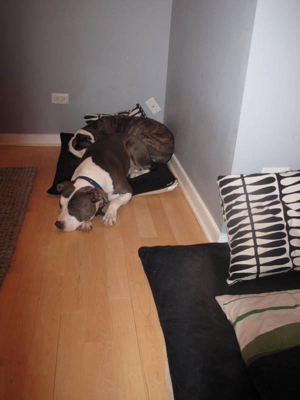 Two Pitties In The City Doggystyle Twin Dog Beds