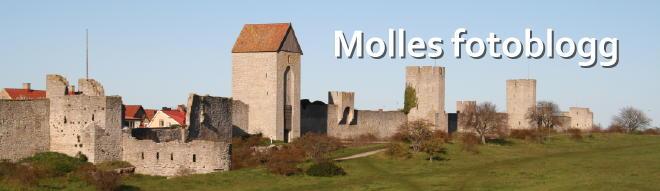 Molles fotoblogg