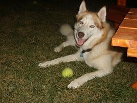 My sweet dog, Abby