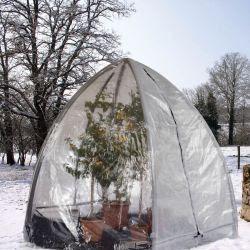 Pflanzen winter