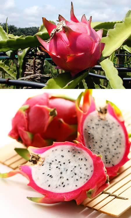 pomegranate fruit how to cut dragon fruit