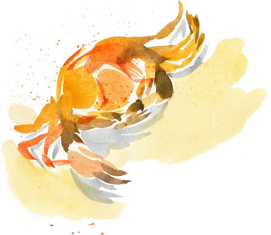 Laurianne chevalier le crabe color - Dessiner un crabe ...