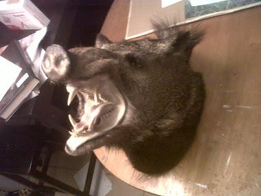 hog mount