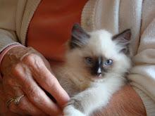 Dewey the Ninja Kitten