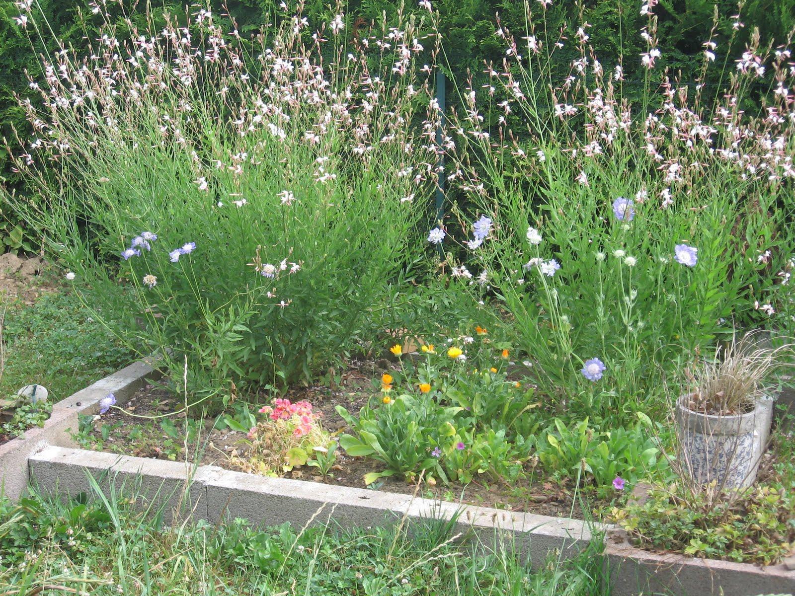 F e du jardin et du logis c 39 est la fin de l 39 t summer for Jardin 5 juillet biskra