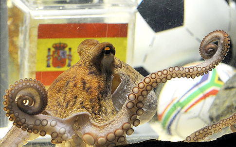The World Cup Octopus. The predictions of Octopus