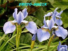 VISIT 'PHOTO-MAGIK'