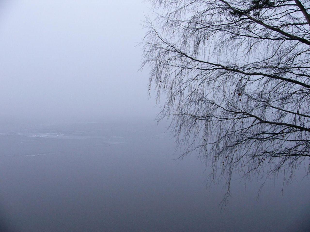 curvo neblina ella