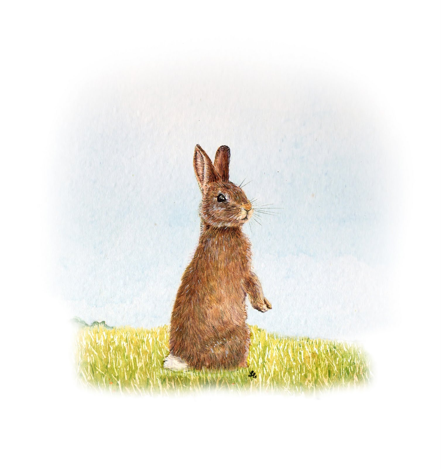 Hare illustration - photo#28