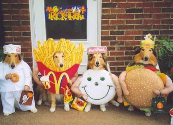 funny pictures of dogs in costumes. Images Of Dogs In Costumes.