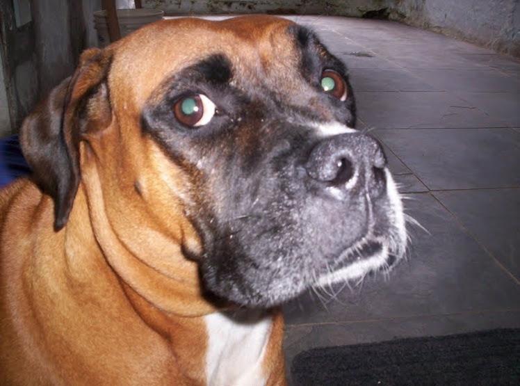 Torat, The Boxer!