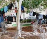 Plantas ornato muertos-tendedero ropa plaza principal Calkiní. 3dic2010.