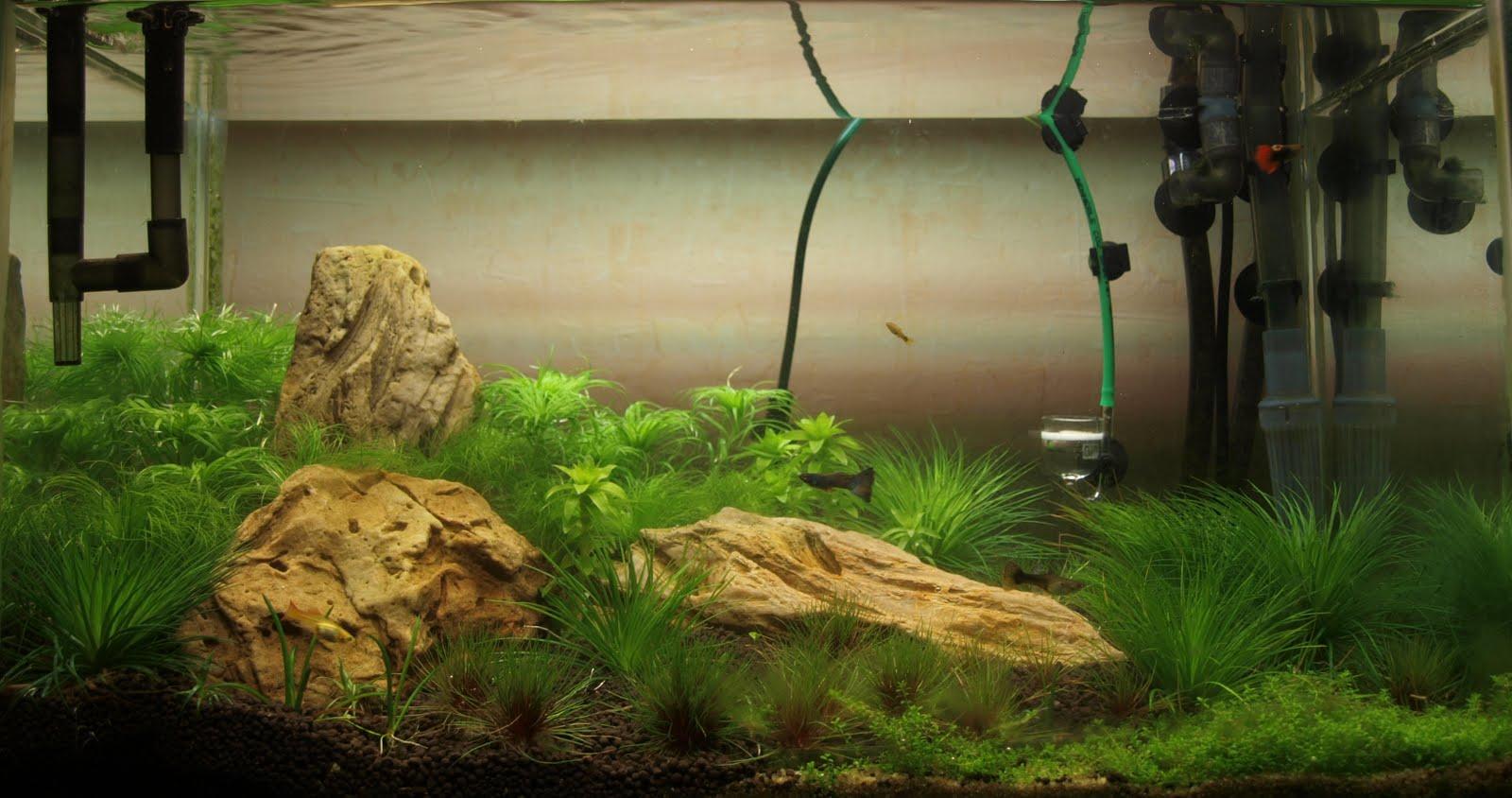 Внешний фильтр для аквариума фото 5