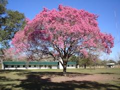 Árbol Nacional del Paraguay
