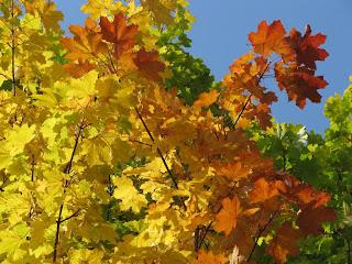 осень яркая