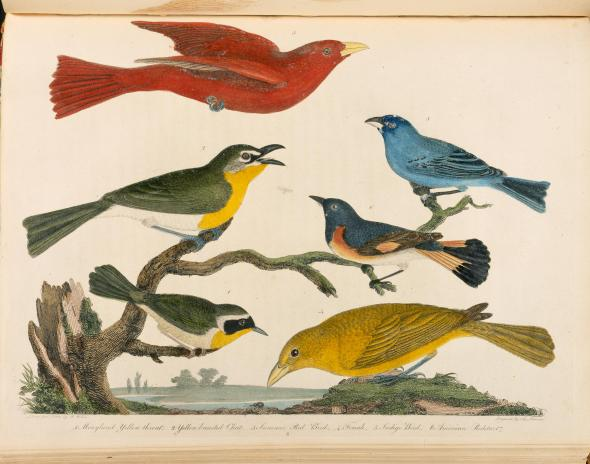 Audubon : Early Drawings by John James Audubon 2008 1st Edition In The Slip Case