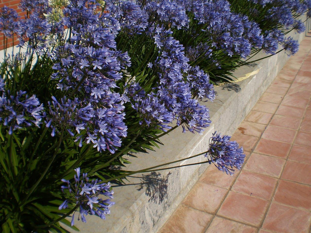 Las mejores fotos de las decoraciones florales Floristerías  - Fotos De Flores Espectaculares