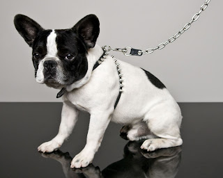 Mug modelling Dsquared2 Dog Capsule Collection exclusively for yoox.com  
