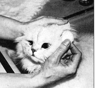 anekaKucing: Cara Memandikan Kucing Kesayangan Anda
