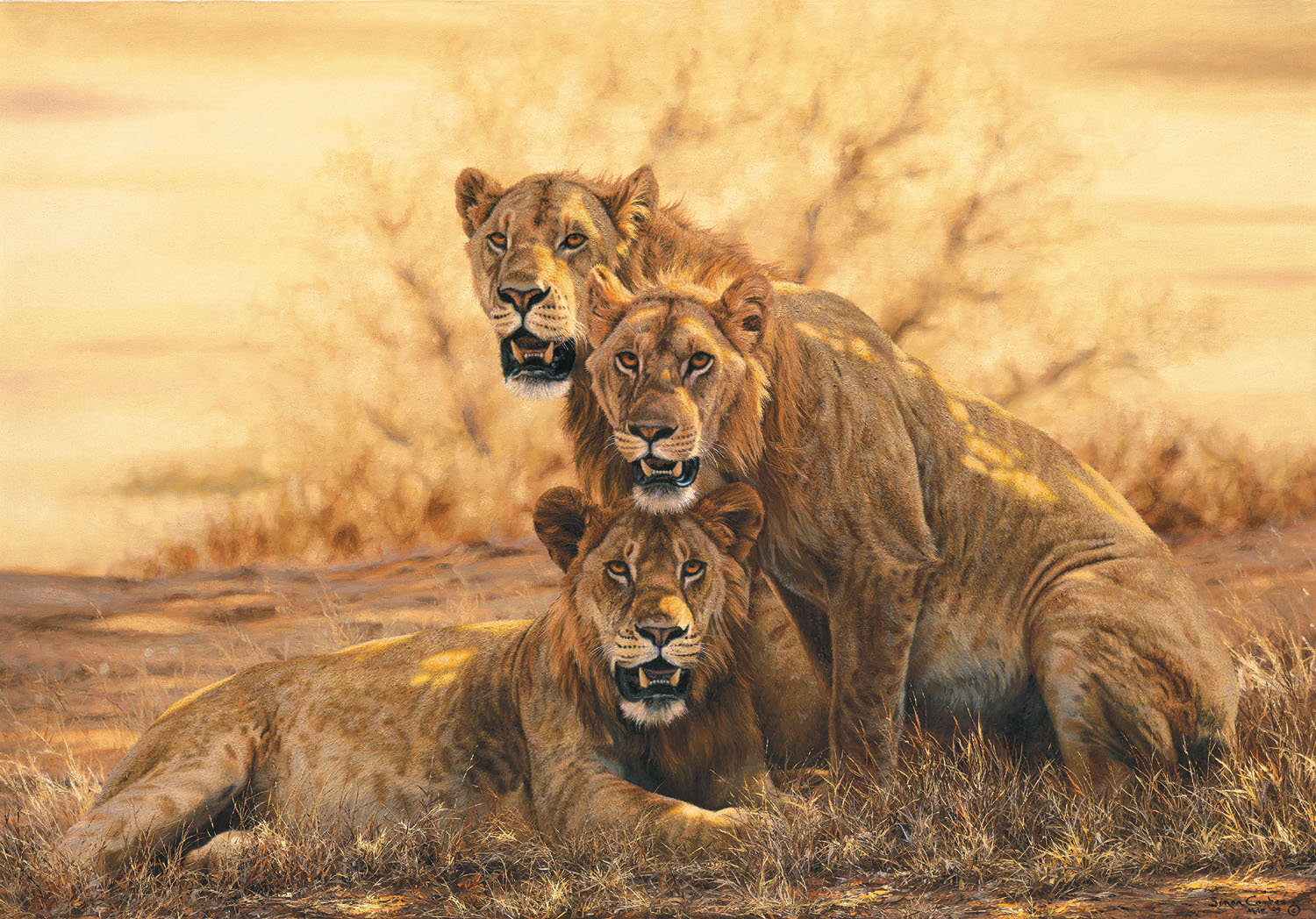 african lions - photo #17