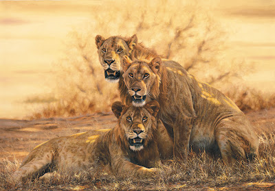 Three Lions Wonderful picture