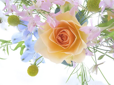 Flowers - a spring bouquet with rose Background