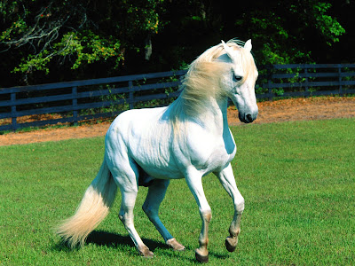 Beautiful Lovely White Horse - White Horse Wallpaper