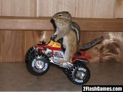 Chipmunk Video Pics