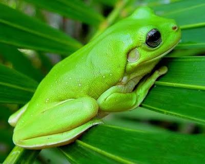 Green Desktop Wallpapers Animals Pics Animal Photos