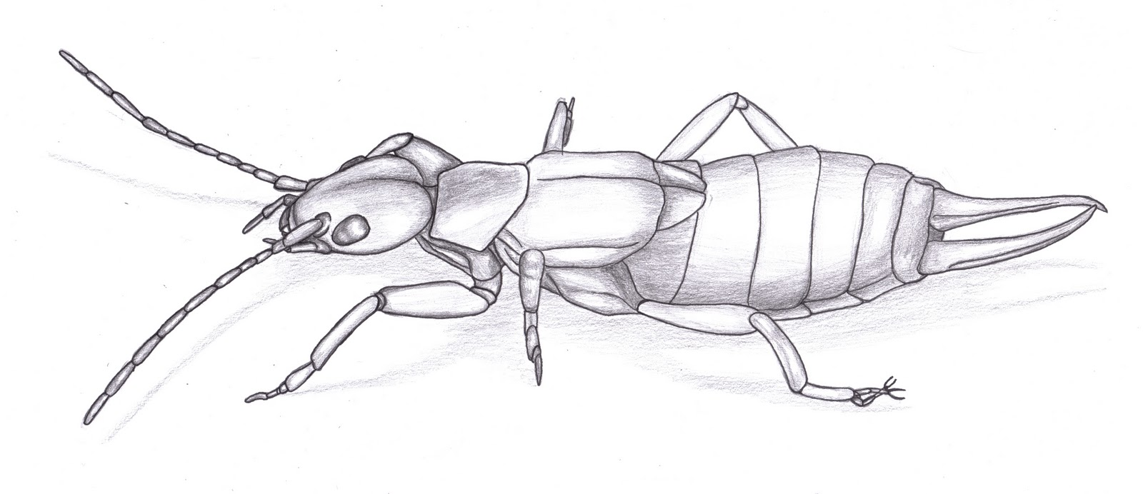 Line Drawing Insects : Simple insect drawing