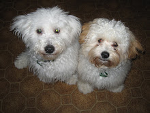 Our Crazy Dogs:  Sheffield and Cobi
