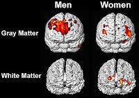 Cerebros hombre y mujer