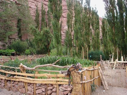 """Cultivos en """"Las Quinoas"""""""