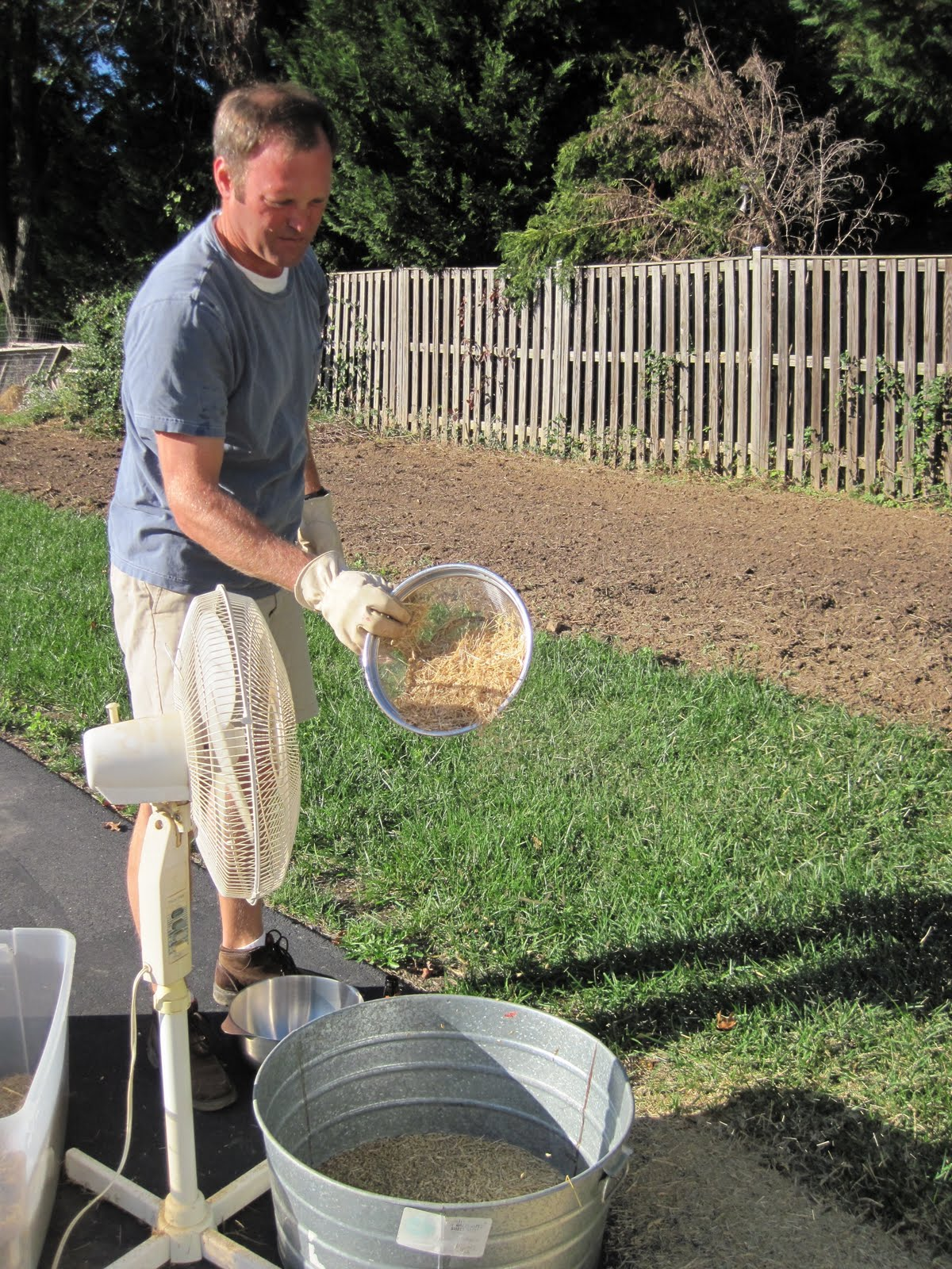 how to grow barley at home