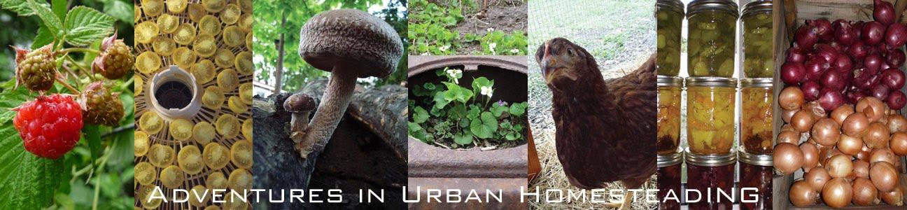 Adventures in Urban Homesteading