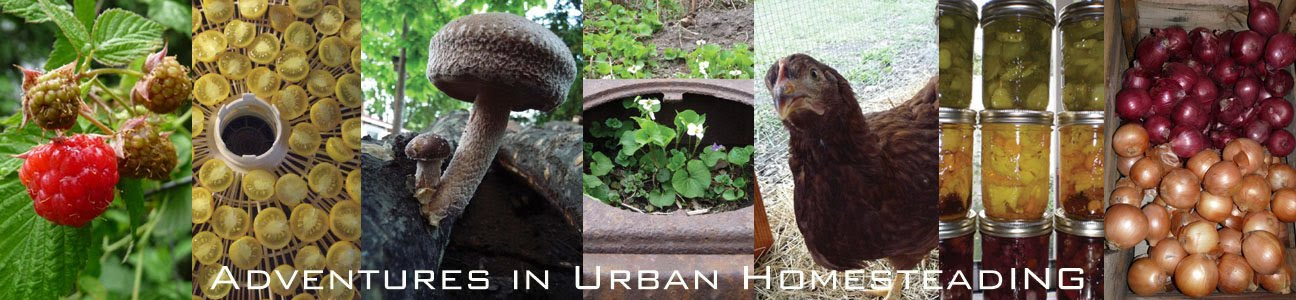Adventures in Urban Homesteading