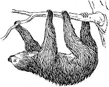 Trögdjur