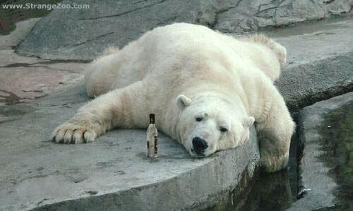 [Image: PolarBearDrunk.jpg]