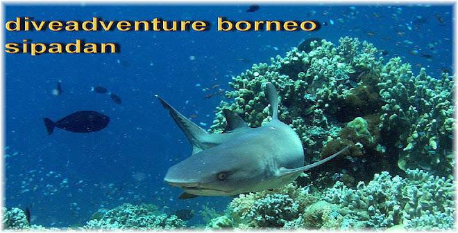 diveadventure borneo - sipadan