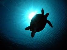 Auf Wiedersehen Sipadan - Insel der Schildkröten