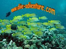 Webpage - dive-adventure