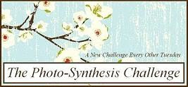 The Photo Synthesis Challenge