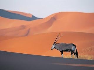 desertico.jpg