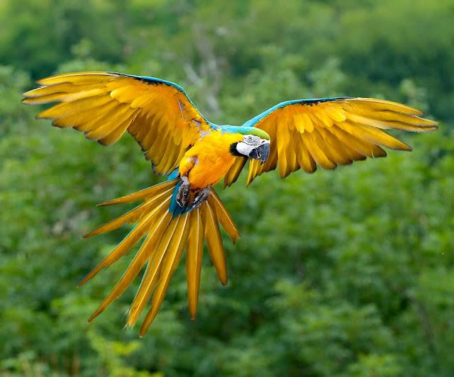 DesFuturo: Flora y Fauna en la Amazonía del Ecuador