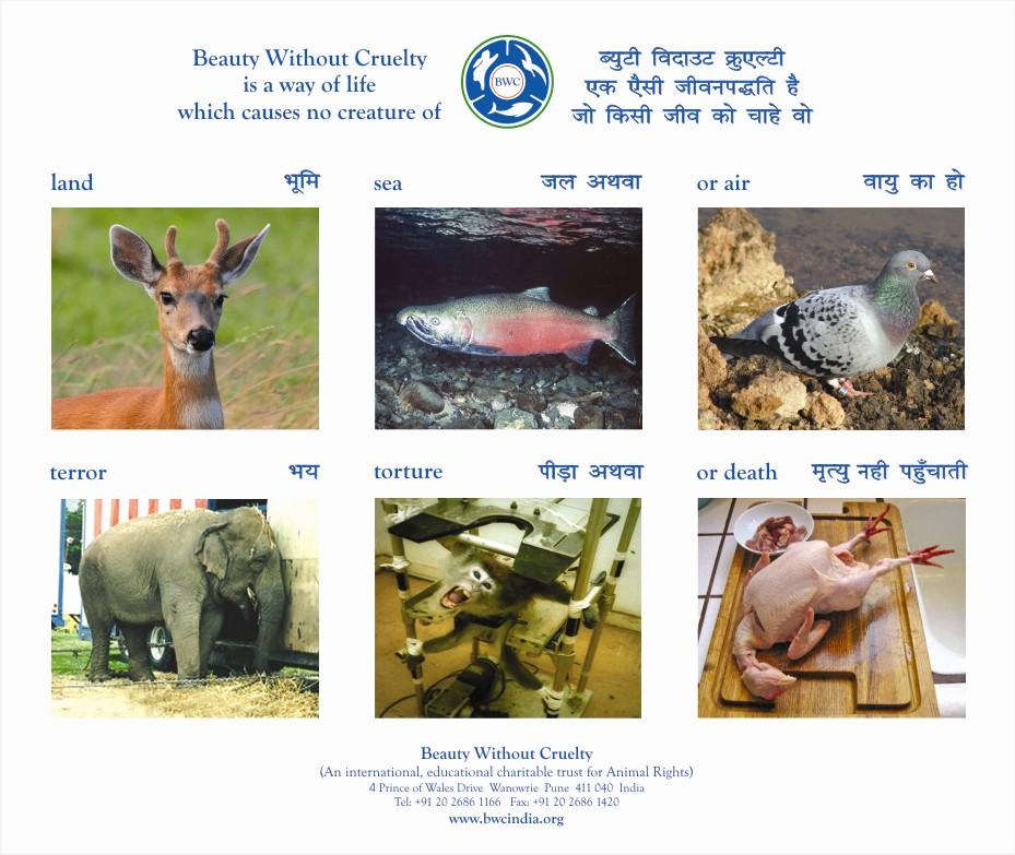 upgrading sanctuaries for animals essay